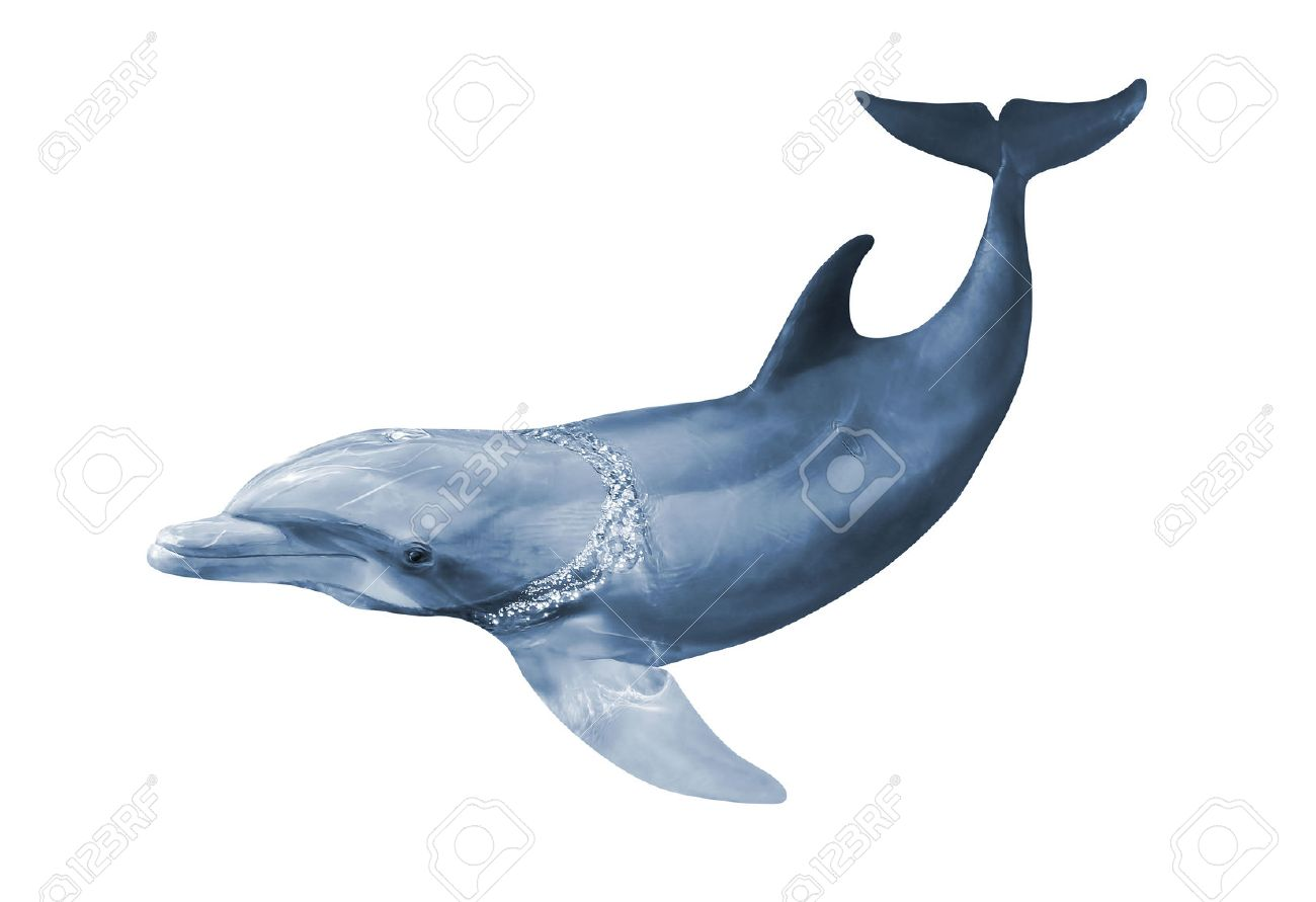 dolphins images u0026 stock pictures royalty free dolphins photos and