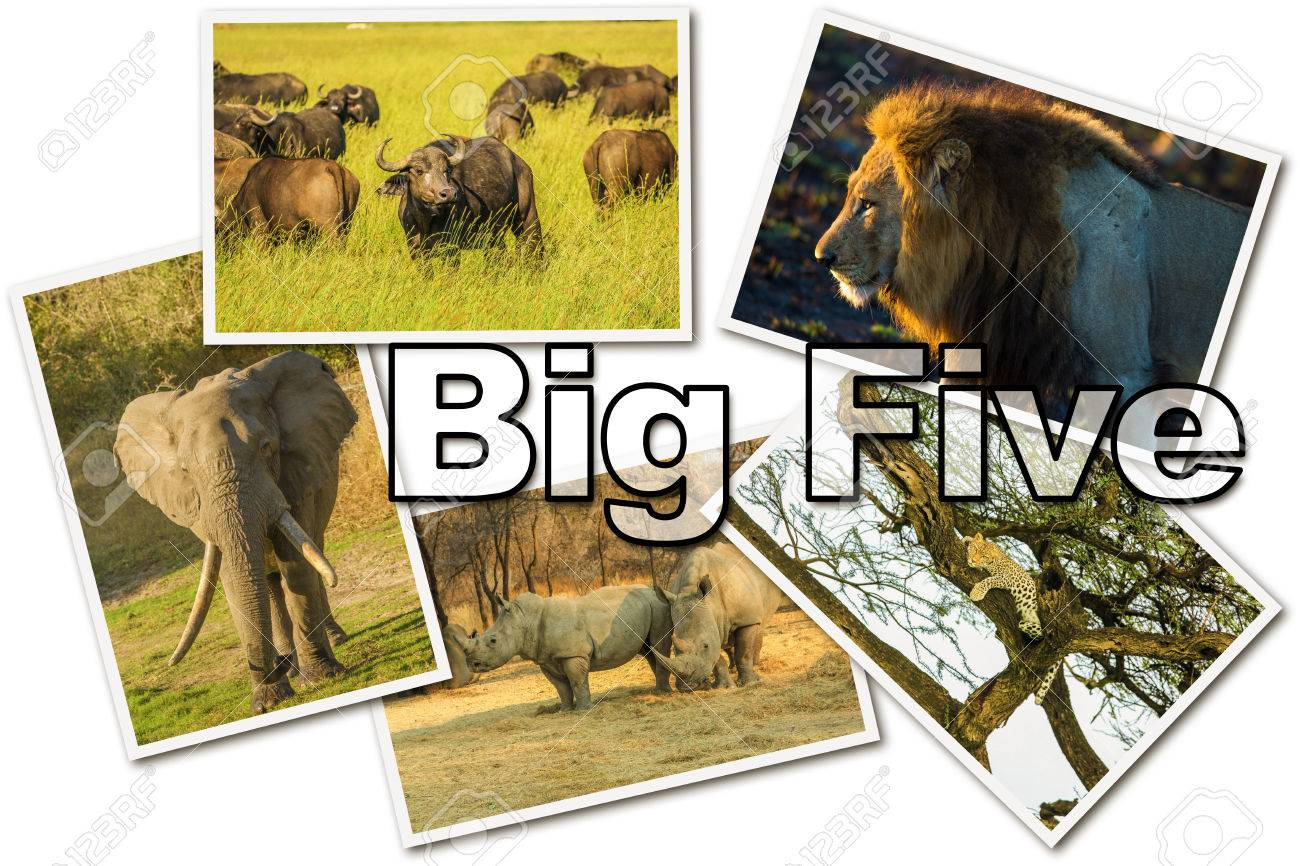 African Big Five animals collage, Buffalo, Elephant, Leopard, Black Rhino and Lion in national parks and african reserves like Kruger, Etosha and the Serengeti on white  background. Stock Photo - 48639956