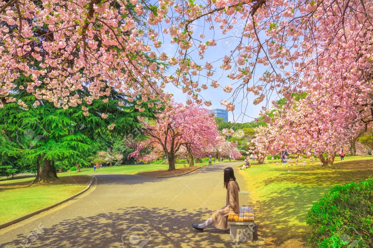 Image result for Shinjuku Gyoen