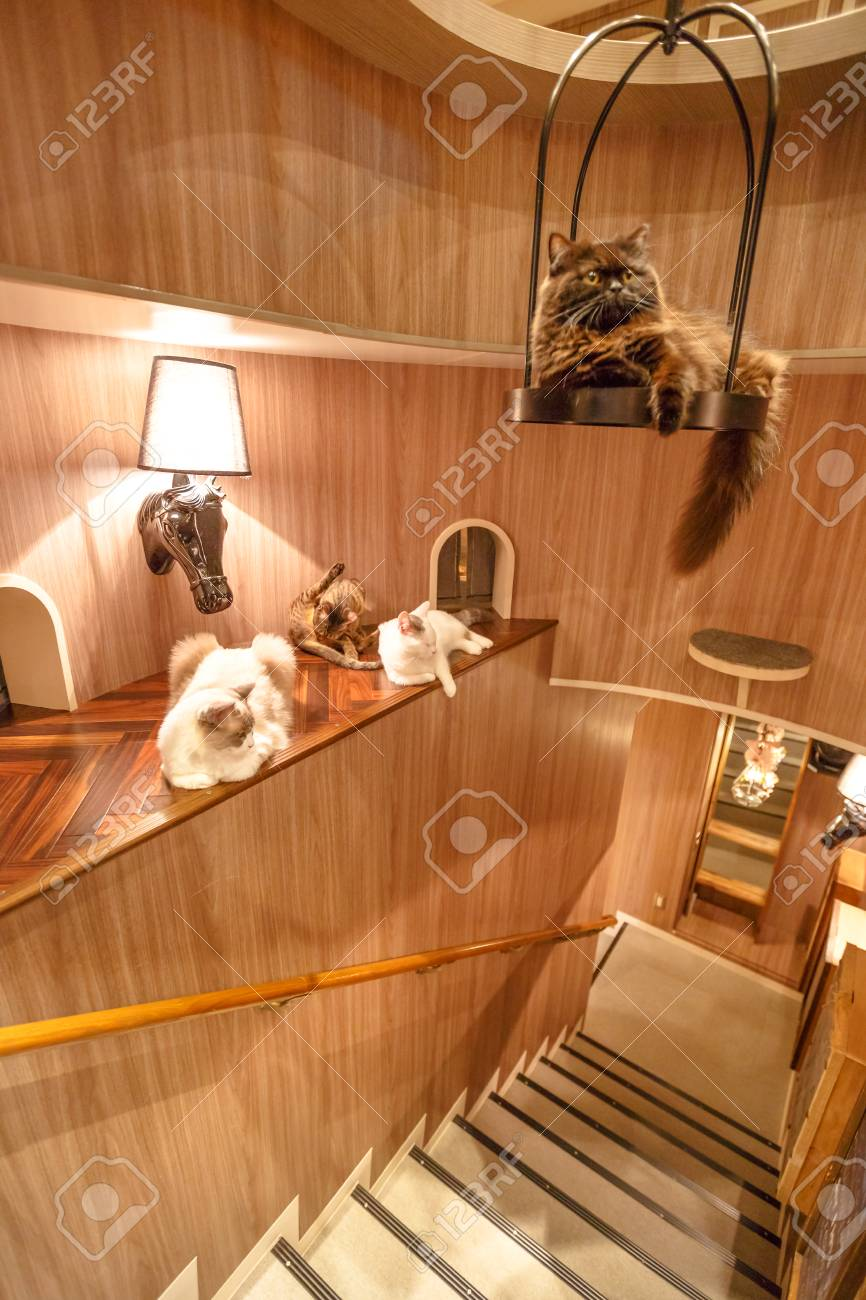 Tokyo Japan April 17 2017 Purebred Cats Inside Of Cat Cafe Stock Photo Picture And Royalty Free Image Image 98649275
