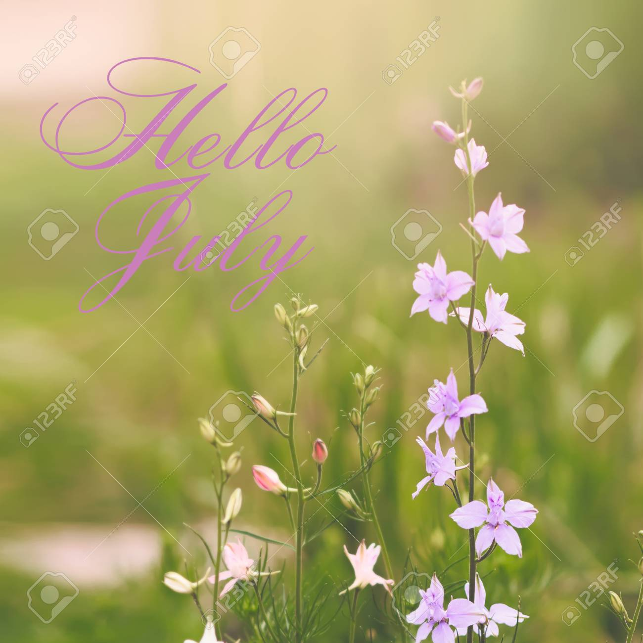 Hello July Greeting Card With Flowers In Background Stock Photo   80545775