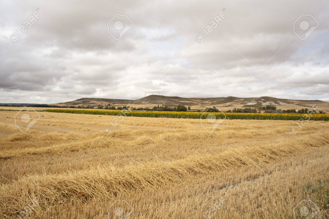 Spanish countryside, Way of St. James Stock Photo - 11153193