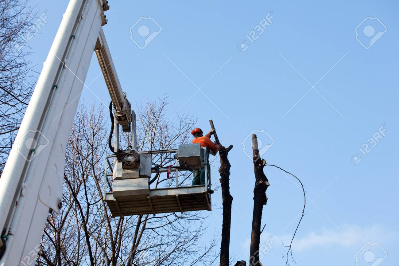 Pruning trees  Stock Photo - 11805210