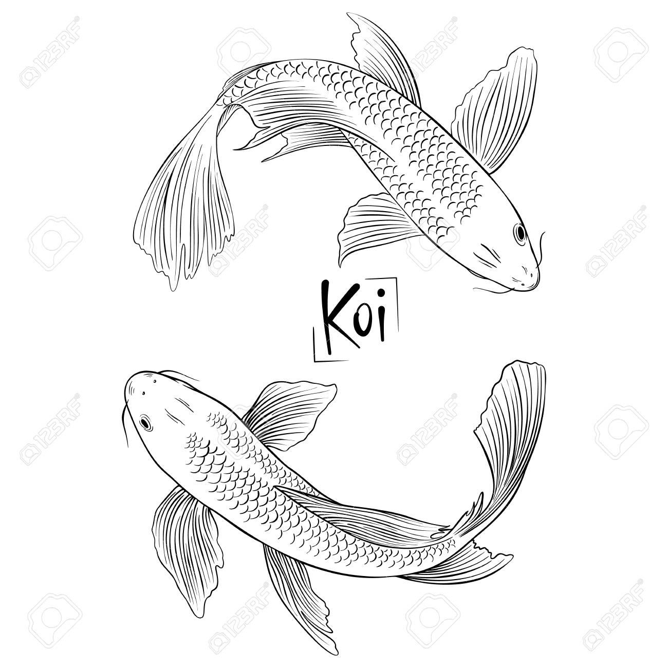 - ForOffice Koi Fish Drawing