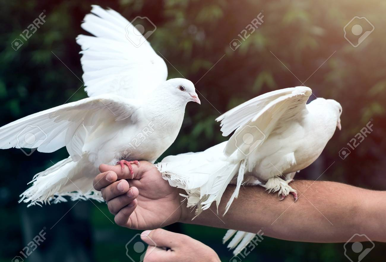 What Does Two White Doves Symbolize The Best Dove 2017