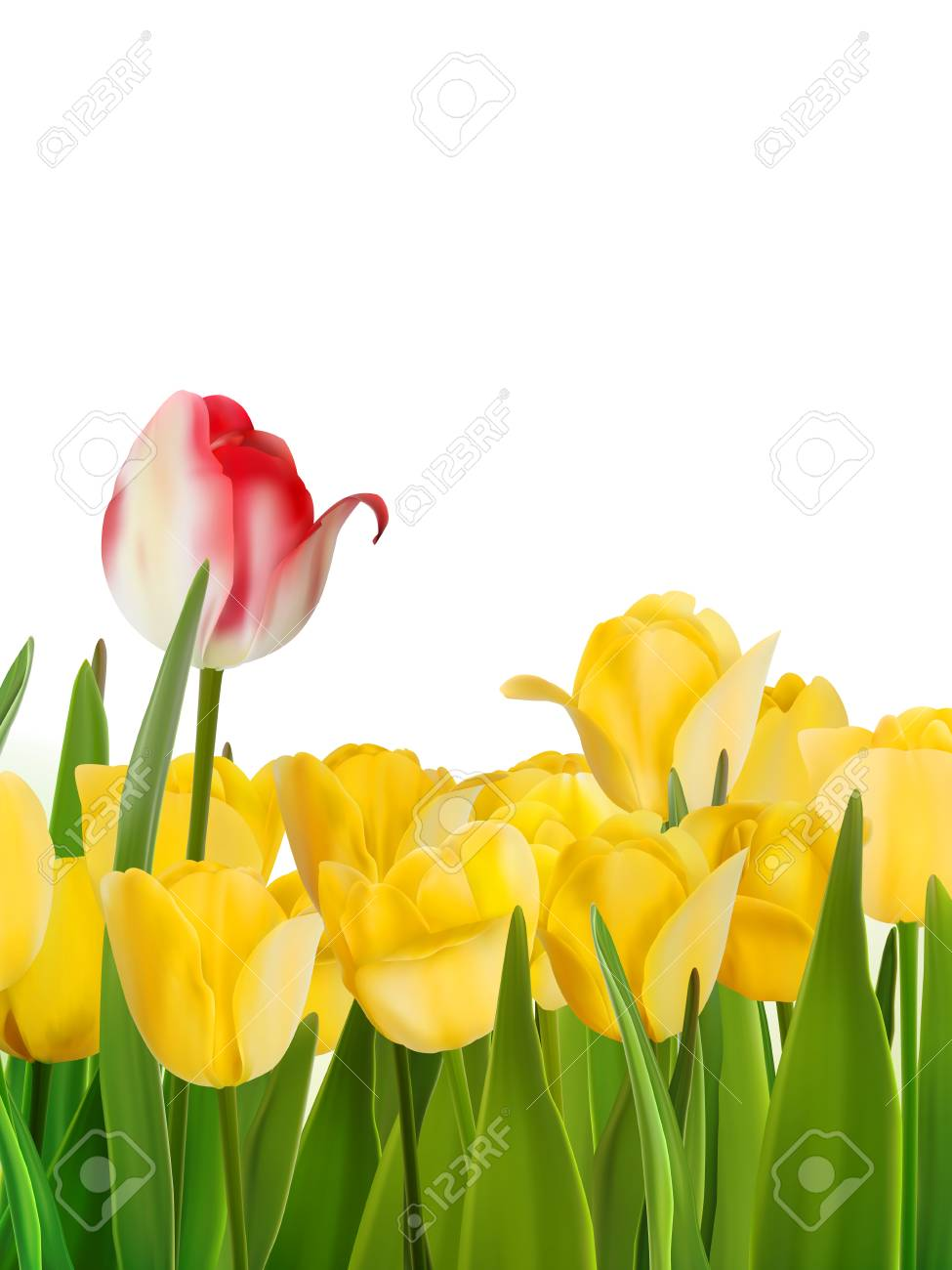 Yellow tulips and one red  EPS 8 Stock Vector - 20165643