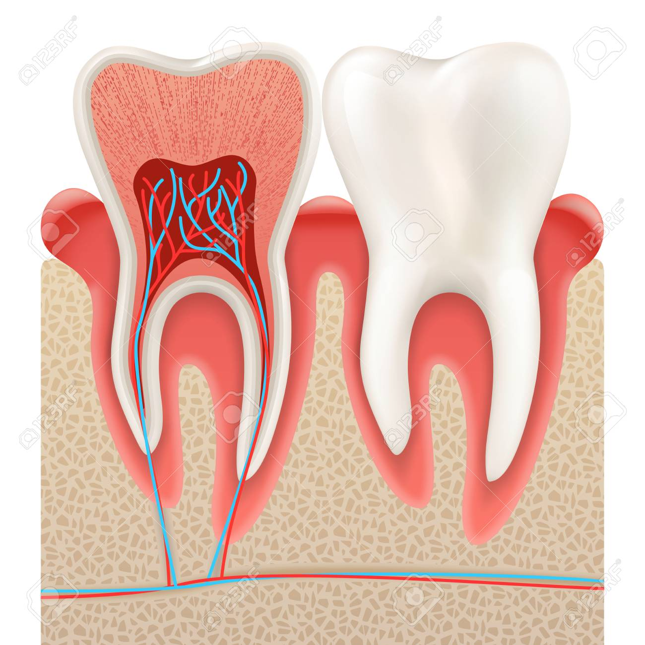 411 Dental Technician Stock Illustrations, Cliparts And Royalty Free ...