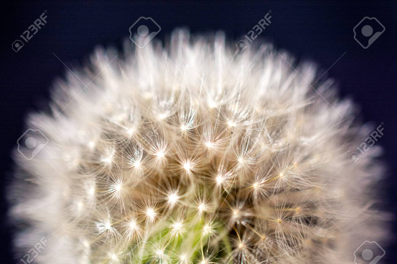 White dandelion flower on black background stock photo picture and stock photo white dandelion flower on black background mightylinksfo
