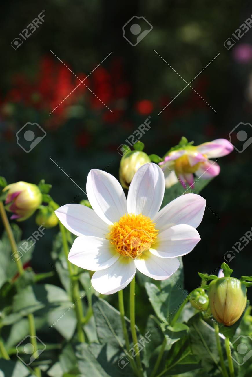 Beautiful Fresh Flowers In Nature Background Stock Photo Picture