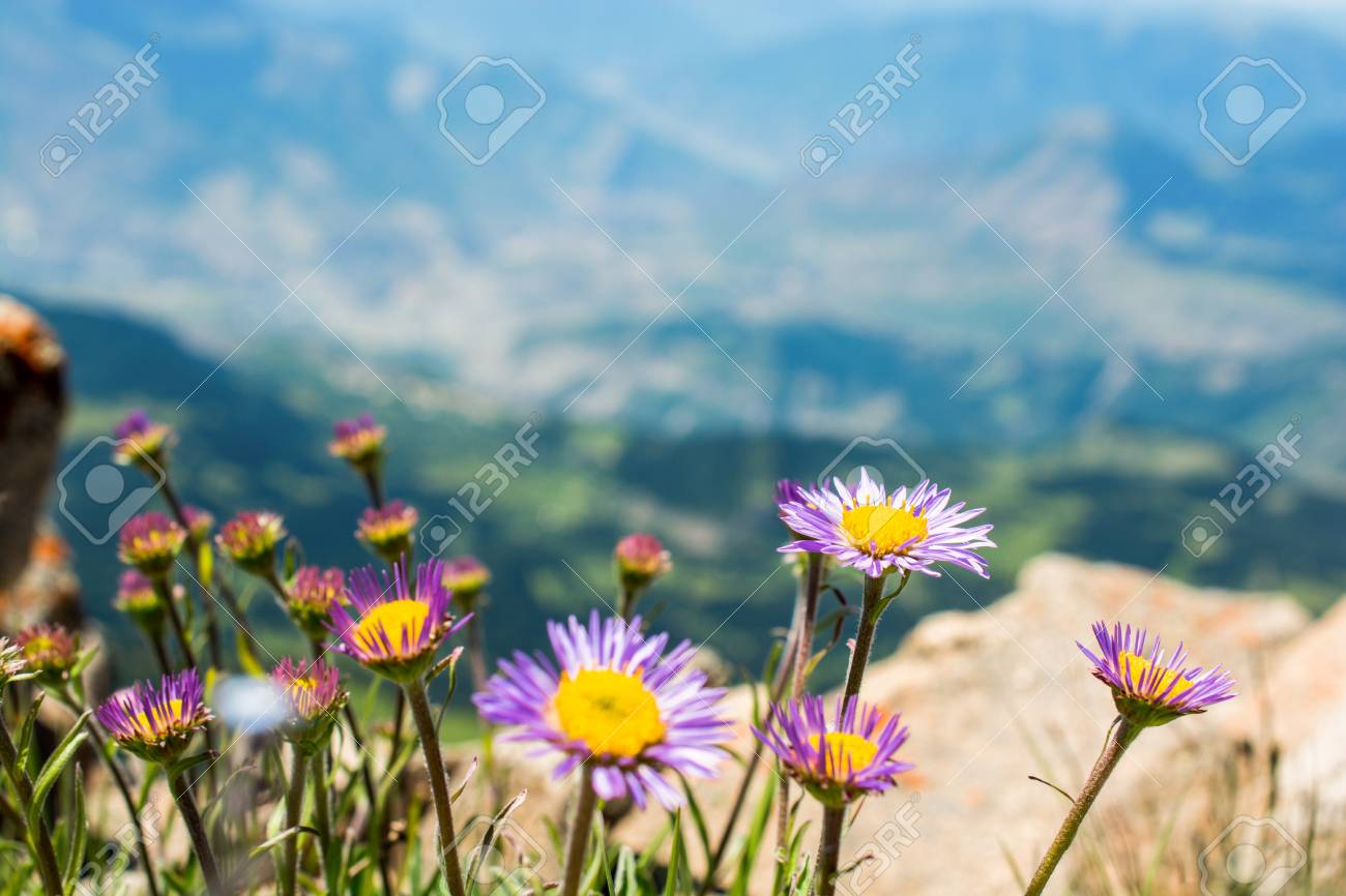 Beautiful Fresh Flowers As A Background Stock Photo Picture And