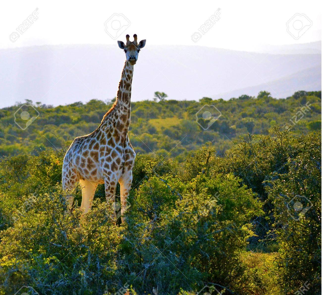 Buckands、東ケープ州、南アフリ...
