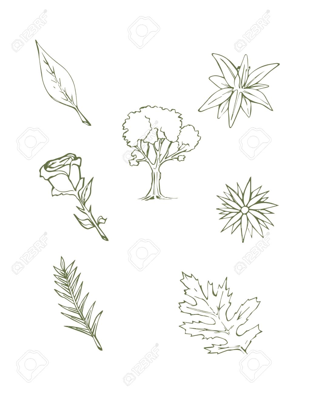 Hand drawn vector illustration or drawing of different plants stock vector 35613551