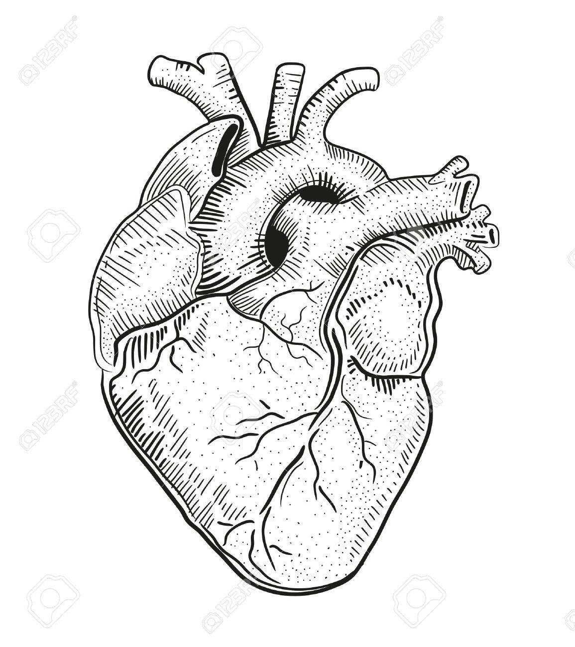 Corazón De Ilustraciones Vectoriales Clip Art Vectorizado Libre De