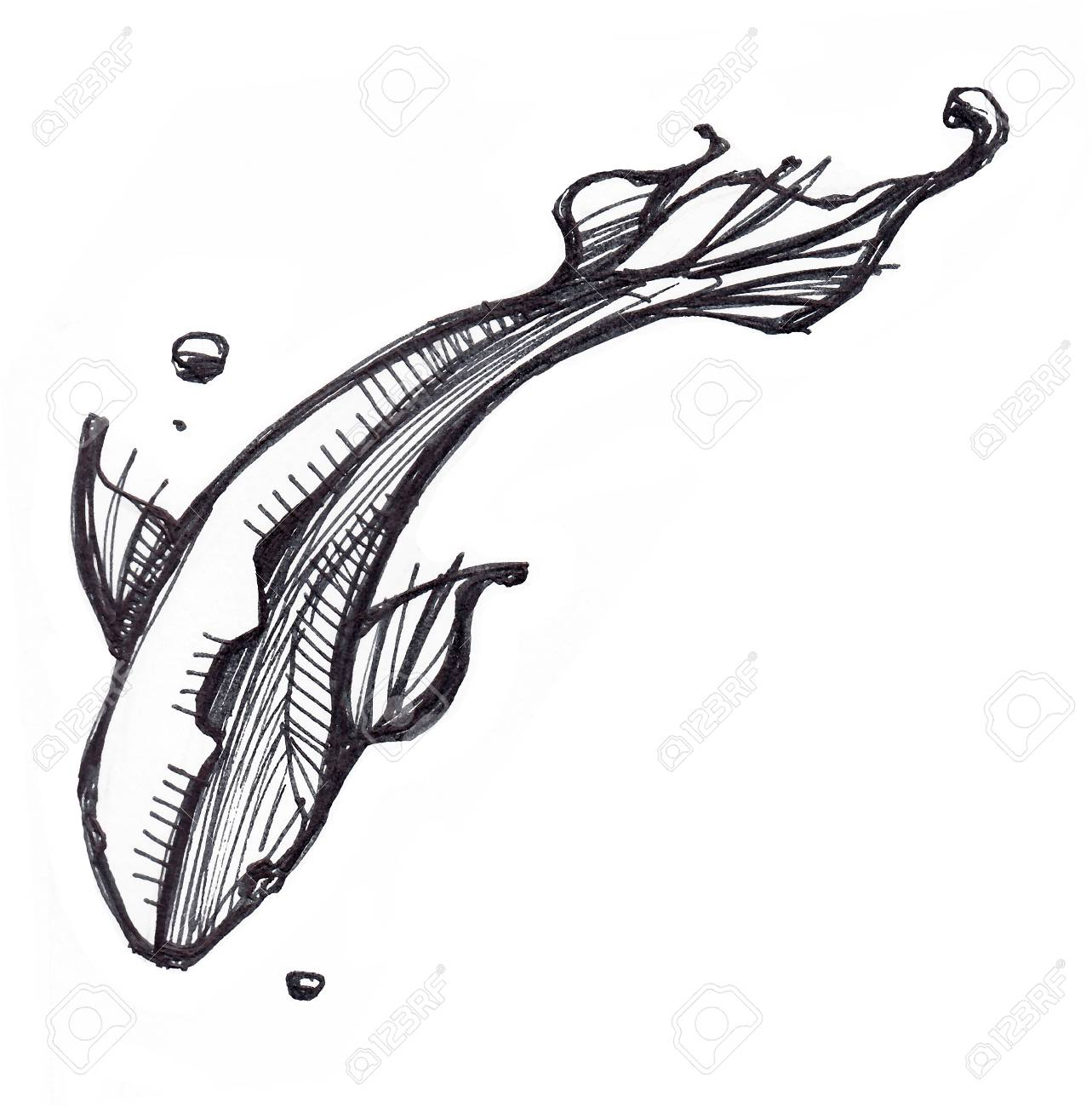 Hand drawn illustration or drawing of a swimming fish stock illustration 60948616