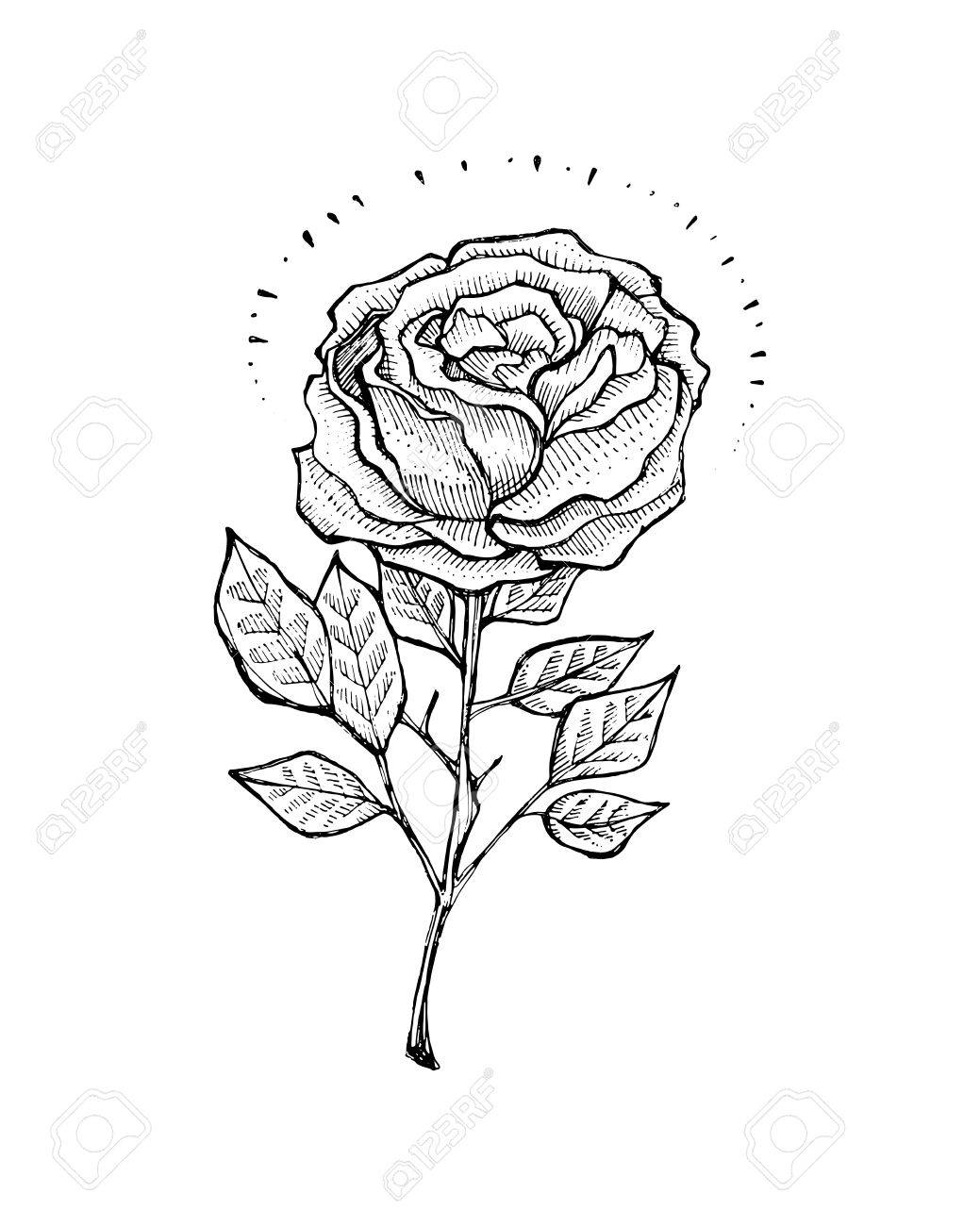 Illustration Dessine A La Main Ou Dessin D Une Rose Dans Un Style De