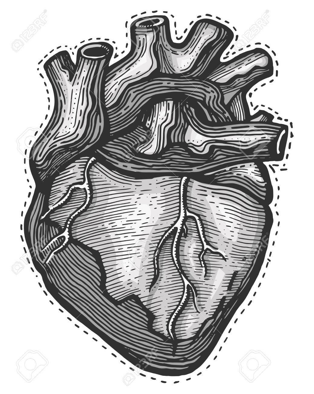 Illustrtion Vector Dibujado A Mano O Dibujo De Un Corazón Humano