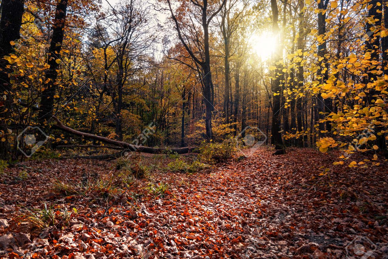 autumn forest with sunight in KÅ'szeg mountain Hungary - 158535276