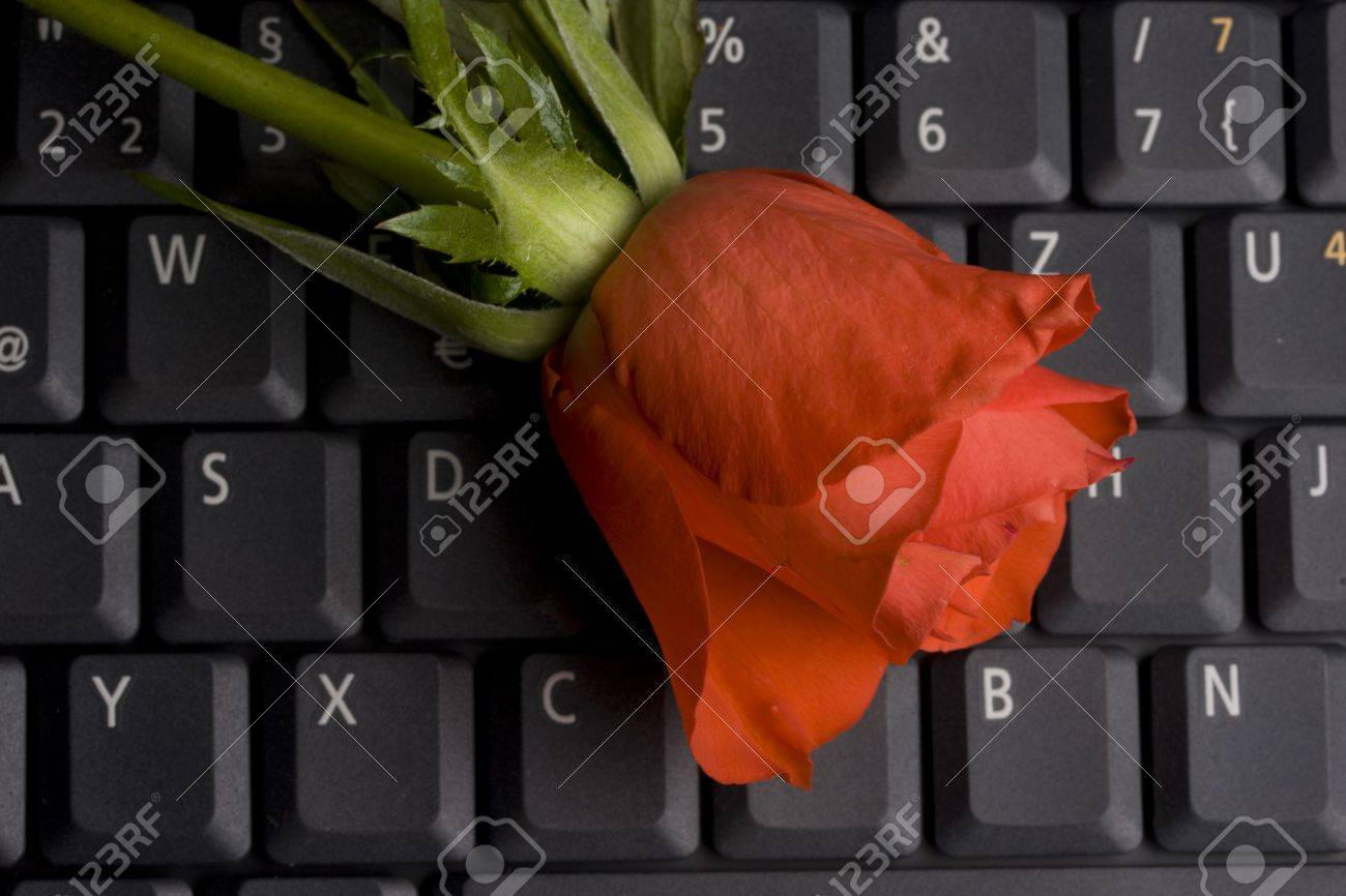 red rose on a notebook computer keyboard Stock Photo - 3213421