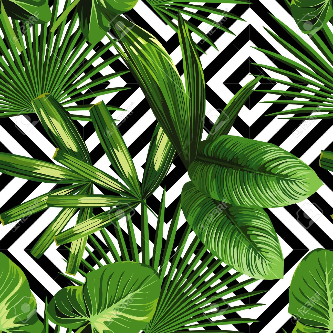 Print summer exotic jungle plant tropical palm leaves. Pattern, seamless floral on the black white geometric background. Nature wallpaper. - 60902531