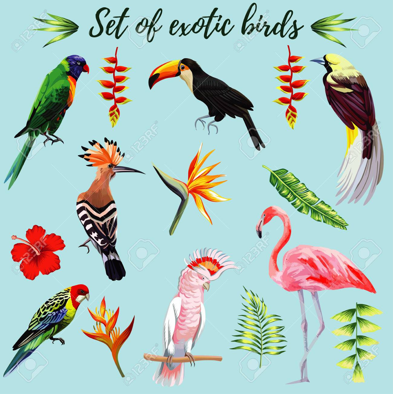 realistic collection of beautiful exotic tropical birds vector