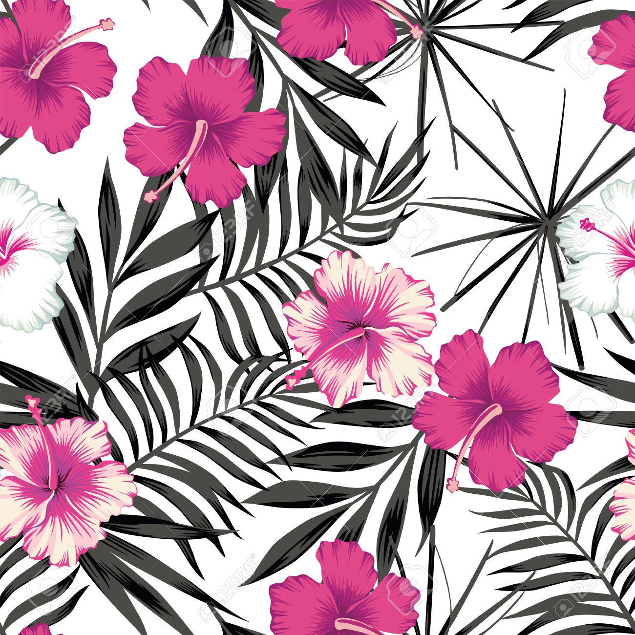 Pink White Hibiscus Flowers On A Black And White Background Of