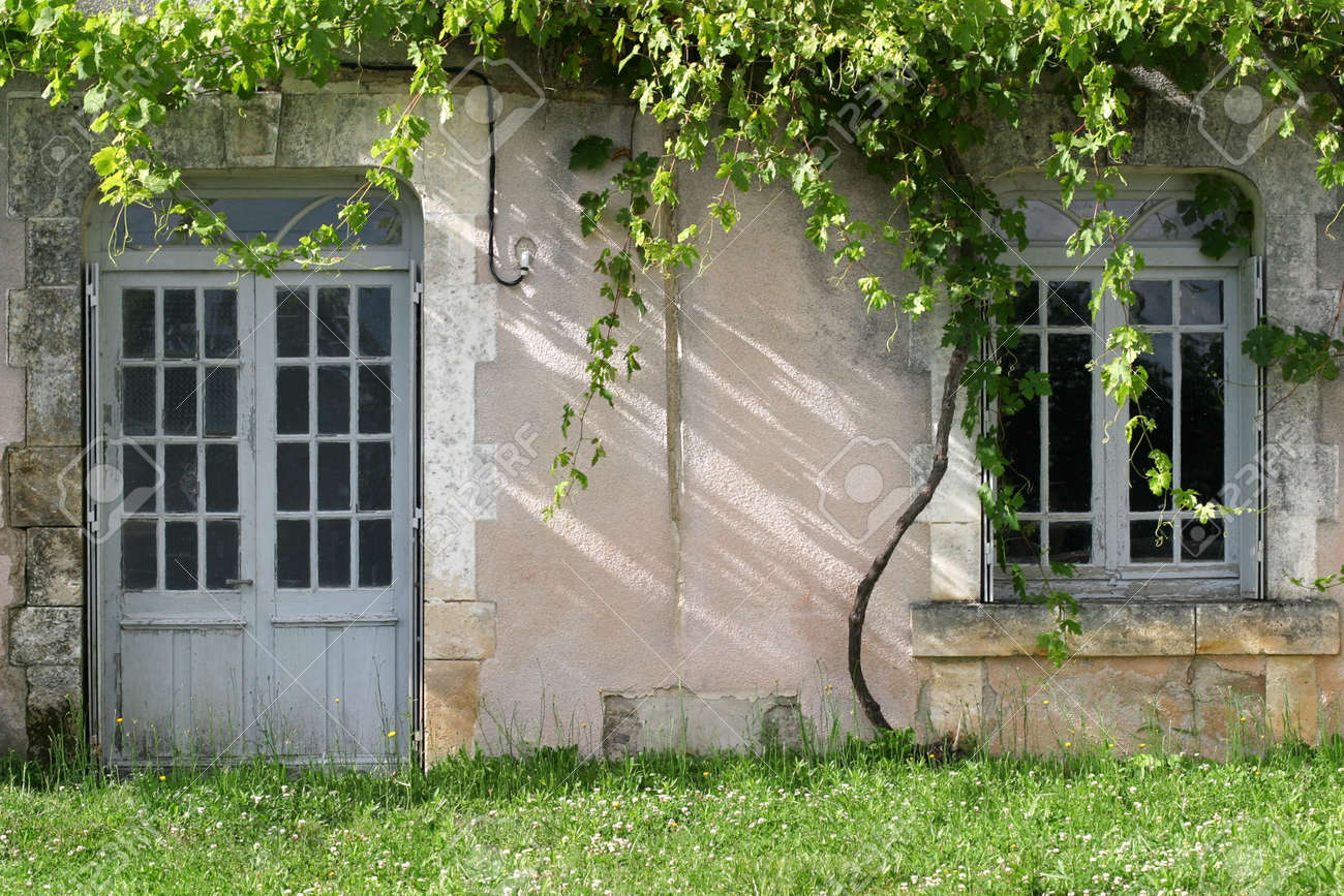 Unattended Grapevines - grape vines overgrowing an abandoned french country house Stock Photo - 1951305