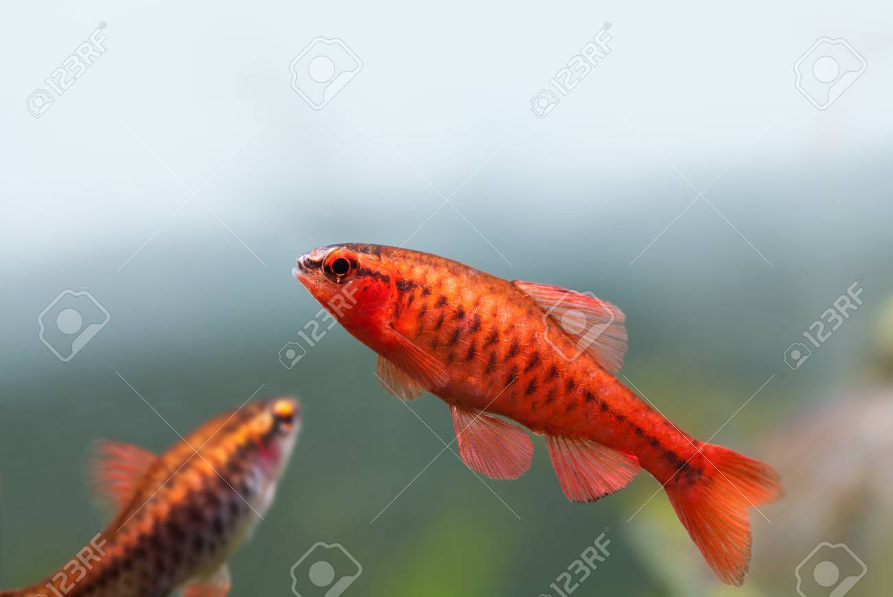Colorful Exotic Fish Close-up. Freshwater Aquarium Tank With.. Stock ...