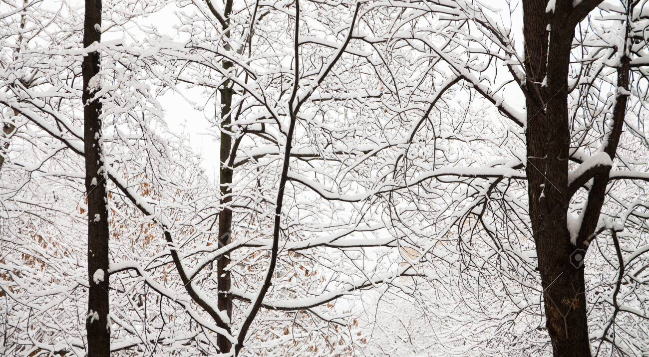 Greeting Card /'winter/'  Nature Photography  Black and White Photo  Snow  Park