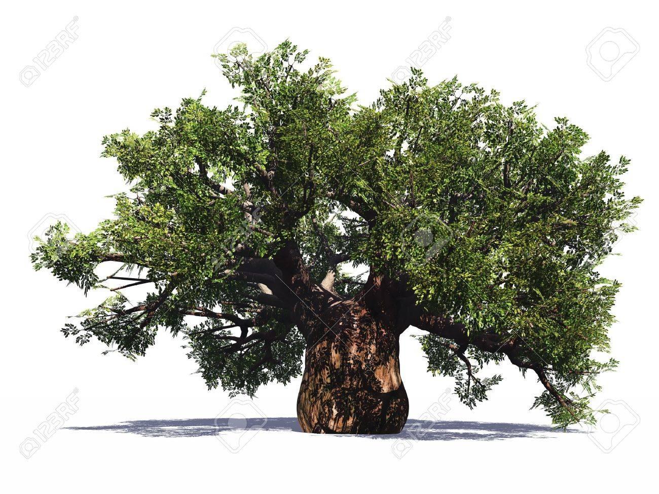 Huge baobab tree isolated - 3720404