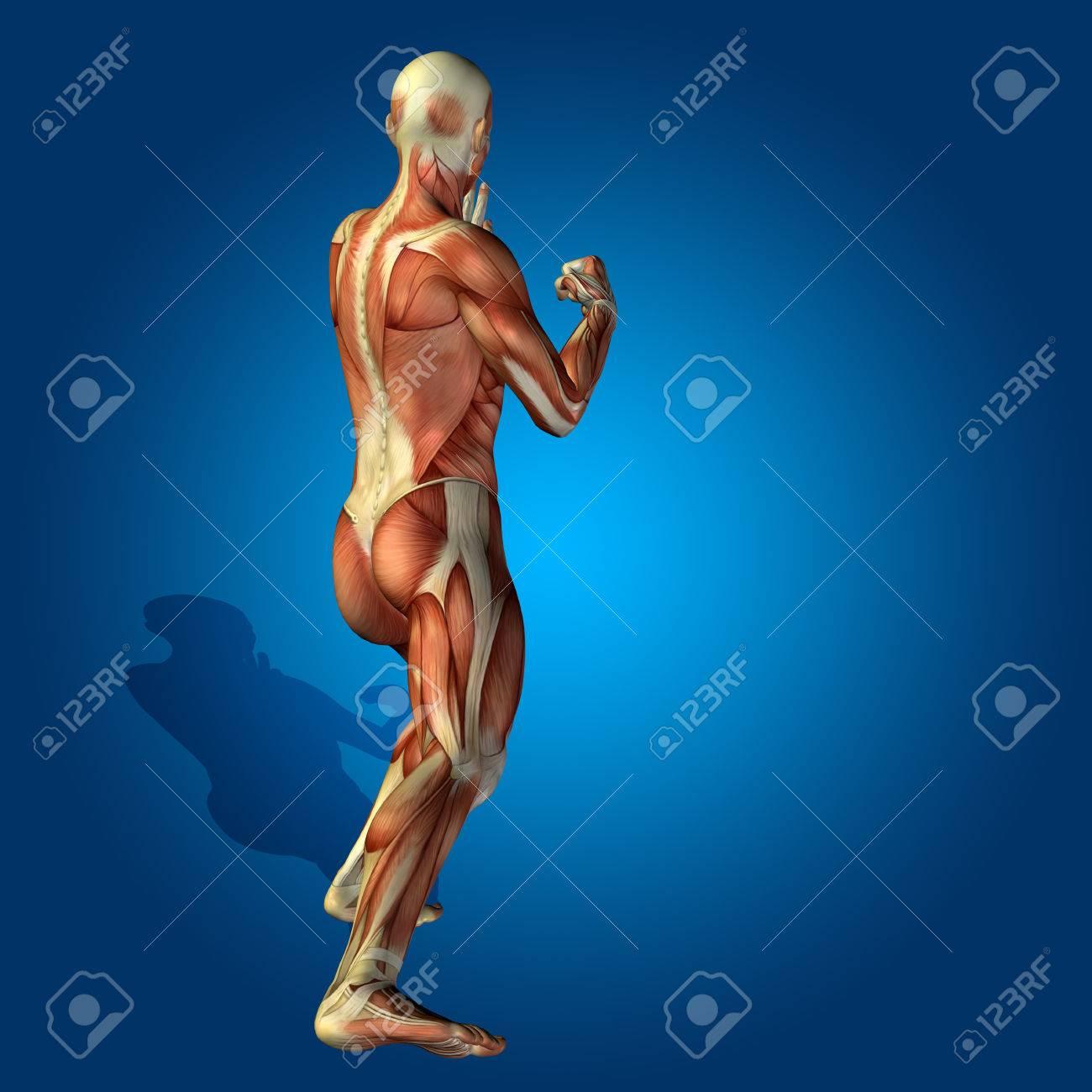Conceptual 3D Anatomía De La Salud Humana En El Hombre Fondo Azul ...