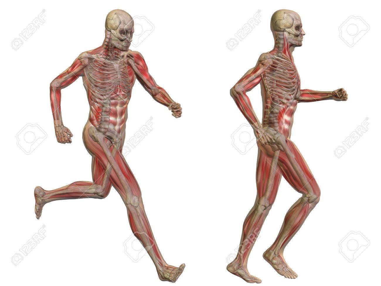 Aislado Conceptual Cuerpo Hombre Anatomía Humana En 3D Fotos ...
