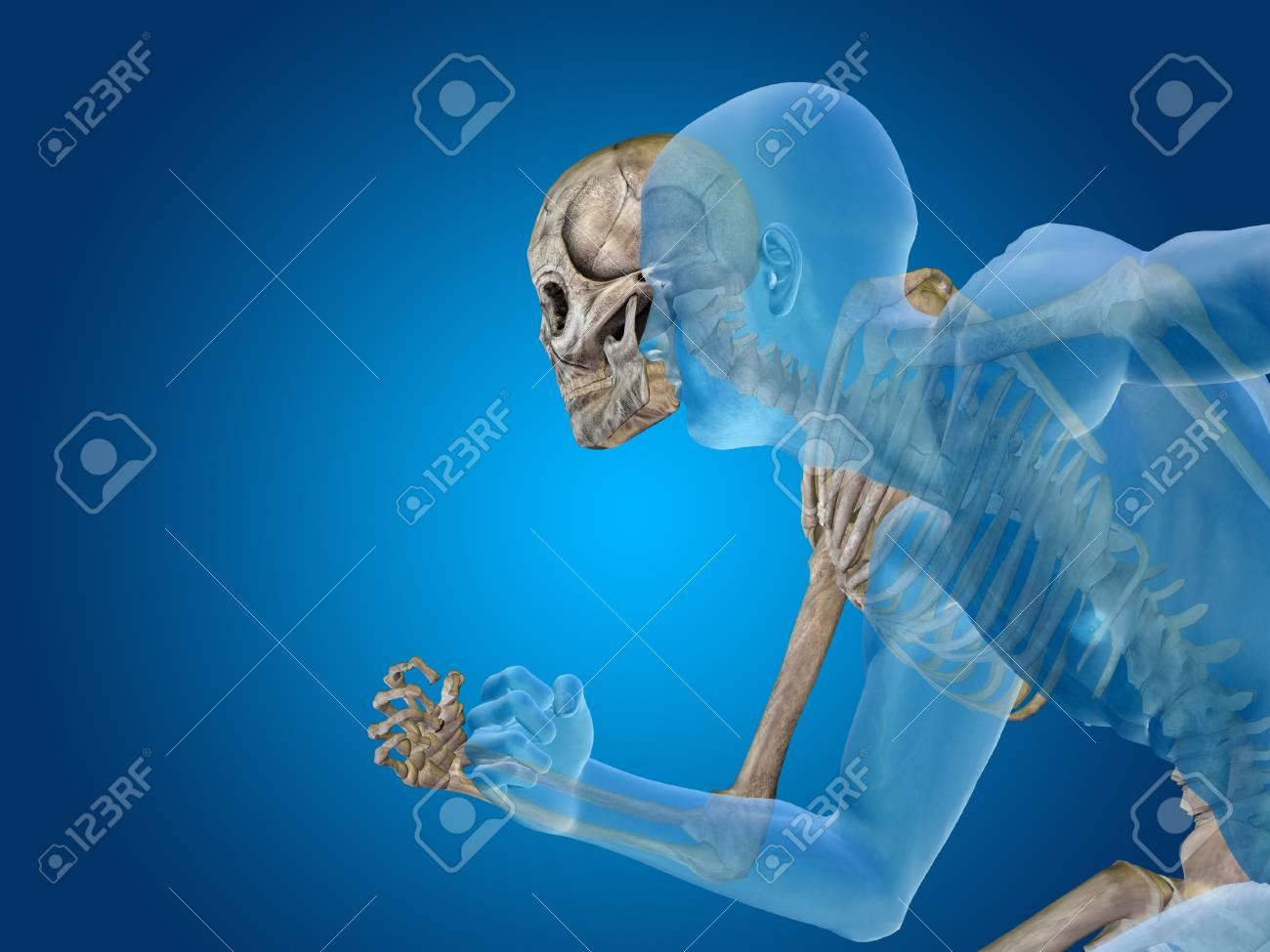 Conceptual Cuerpo Humano Anatomía Sobre Fondo Azul Fotos, Retratos ...