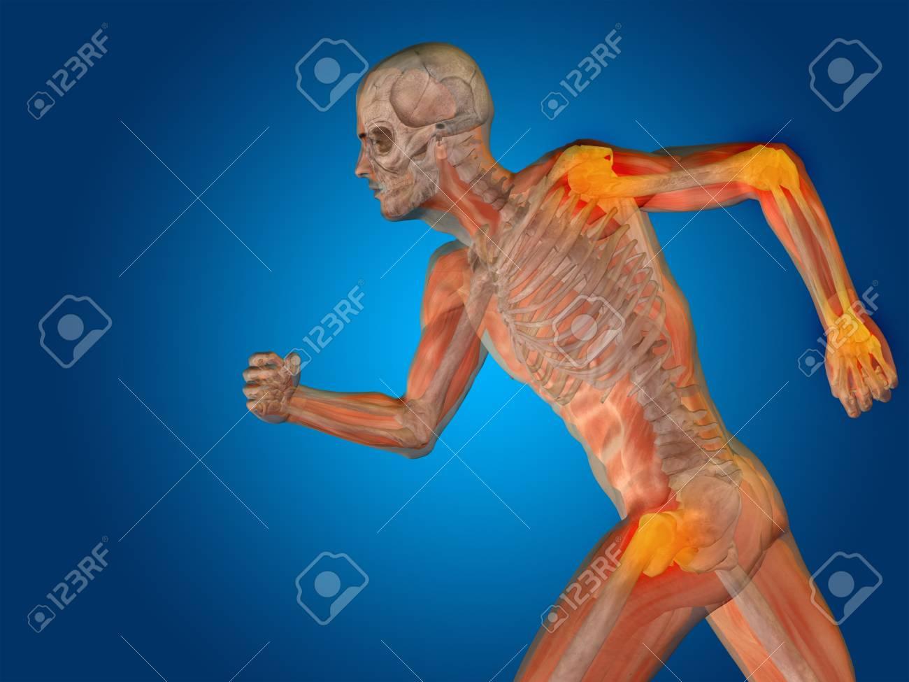Gemütlich Perinealen Körperanatomie Fotos - Anatomie Von ...