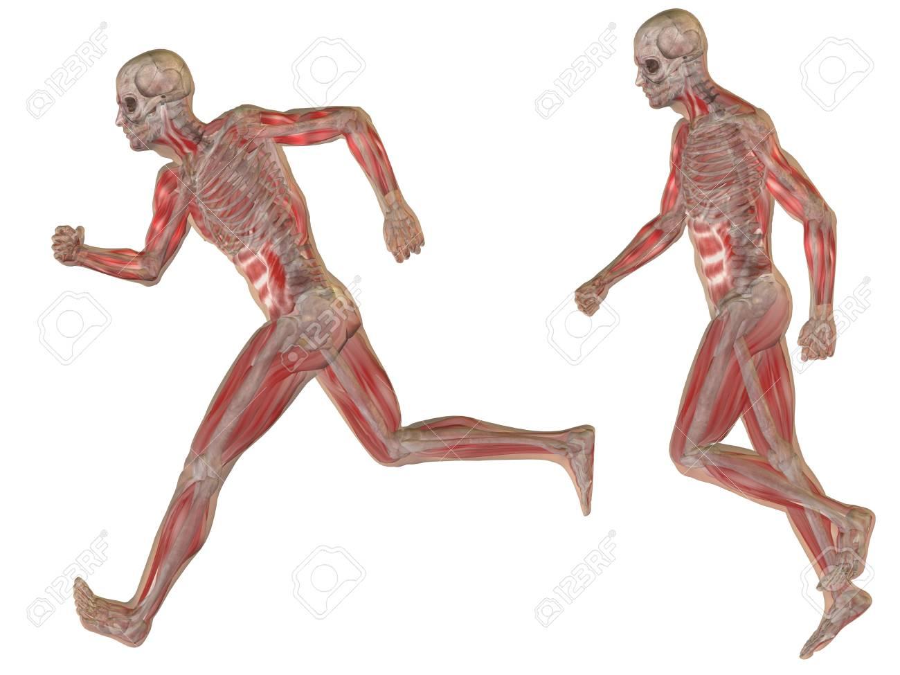 Conceptuele 3D Menselijke Man Anatomie Lichaam Geïsoleerd Royalty ...