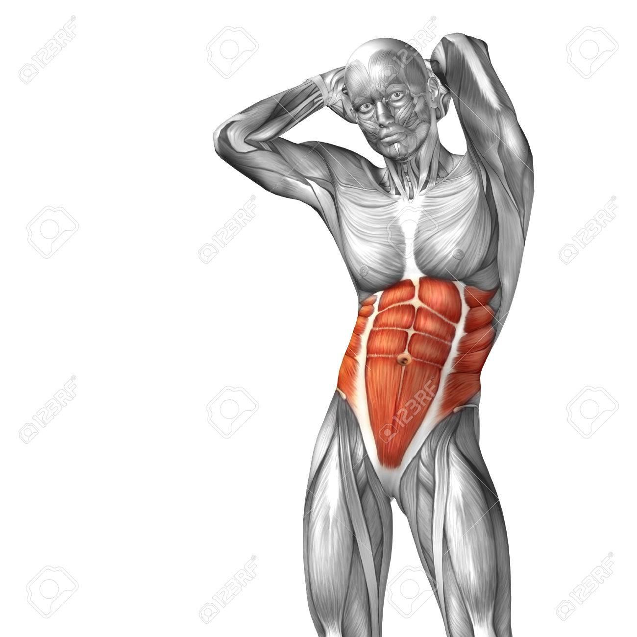 Atemberaubend Männliche Brust Anatomie Galerie - Menschliche ...