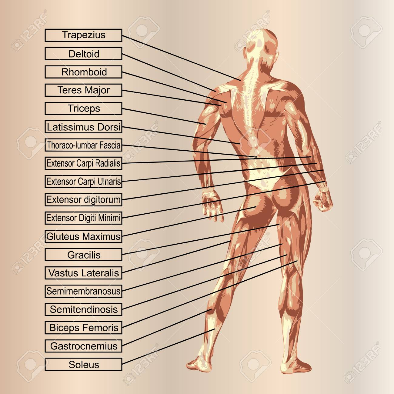 Fein Unterleib Anatomie Zeitgenössisch - Anatomie Ideen - finotti.info