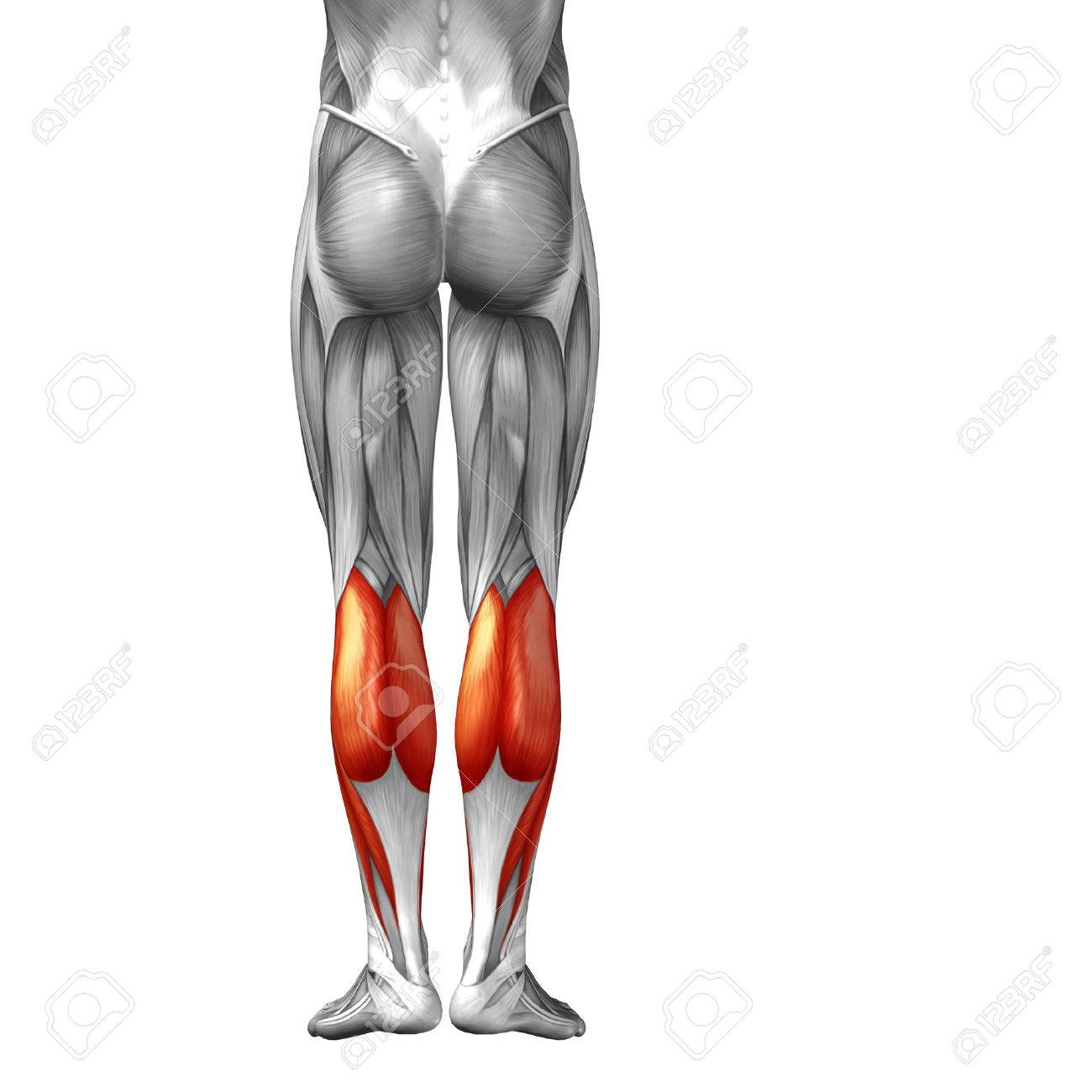 Concept Conceptual 3D Back Lower Leg Human Anatomy Or Anatomical ...