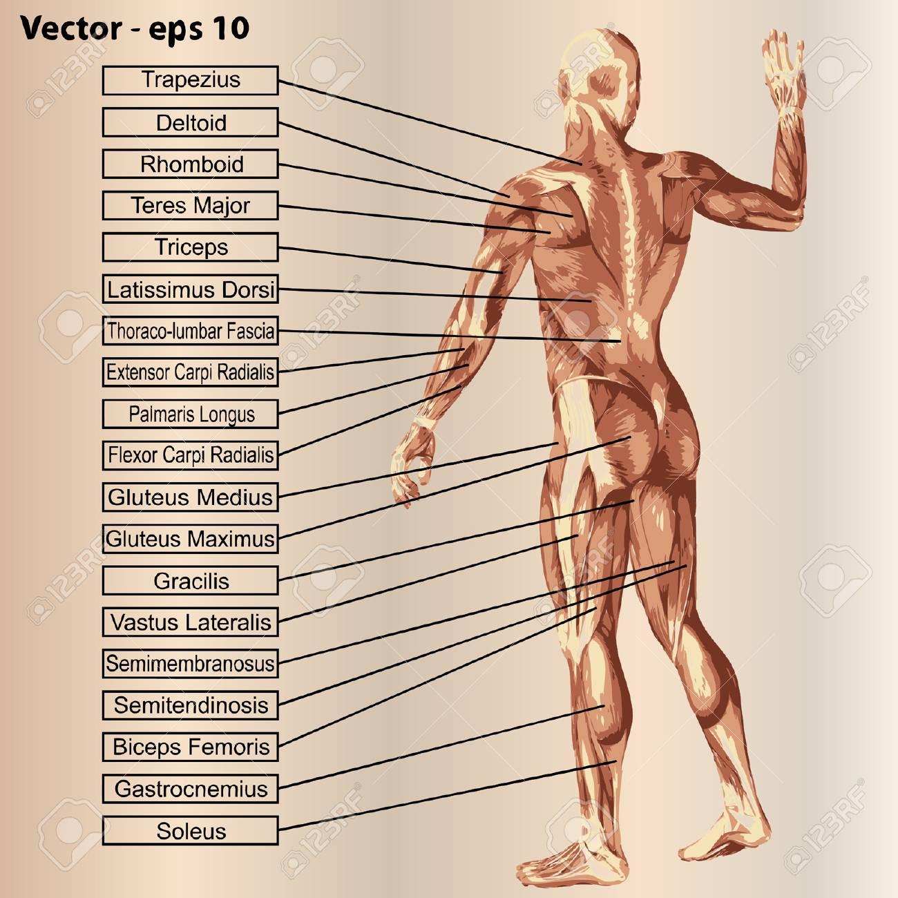 Increíble Grises Anatomía Fundido Ornamento - Anatomía de Las ...