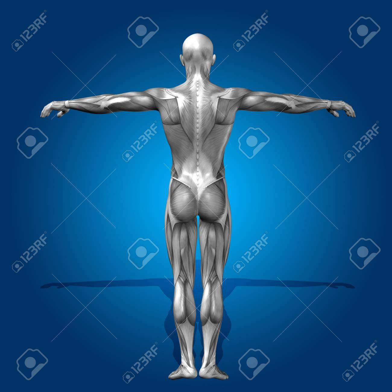 Conceptual 3D Menschlichen Anatomie Mann Gesundheit Auf Blauem ...