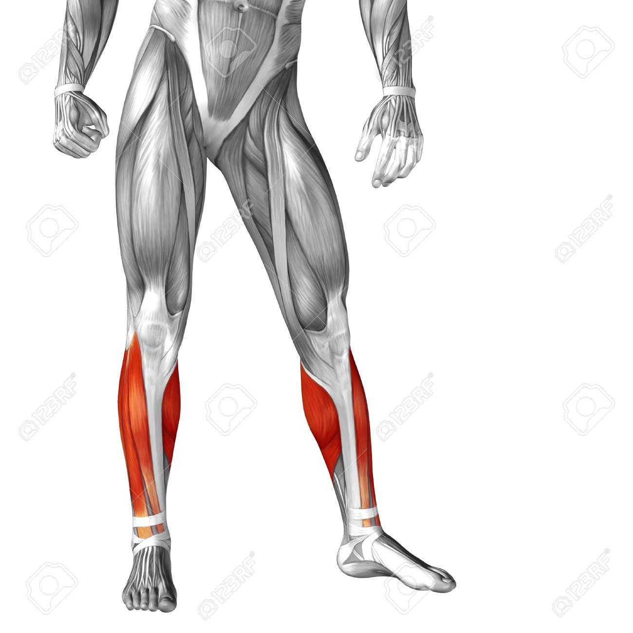 Gemütlich Vordere Arm Anatomie Ideen - Anatomie Von Menschlichen ...
