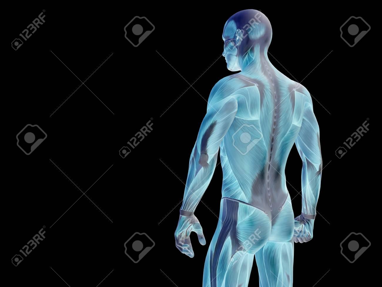 Konzeptionelle Menschliche Körper Anatomie Getrennt Auf Schwarzem ...