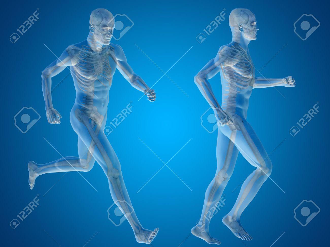 Konzeptionelle Menschen Oder Menschliche 3D-Anatomie Oder Körper Auf ...