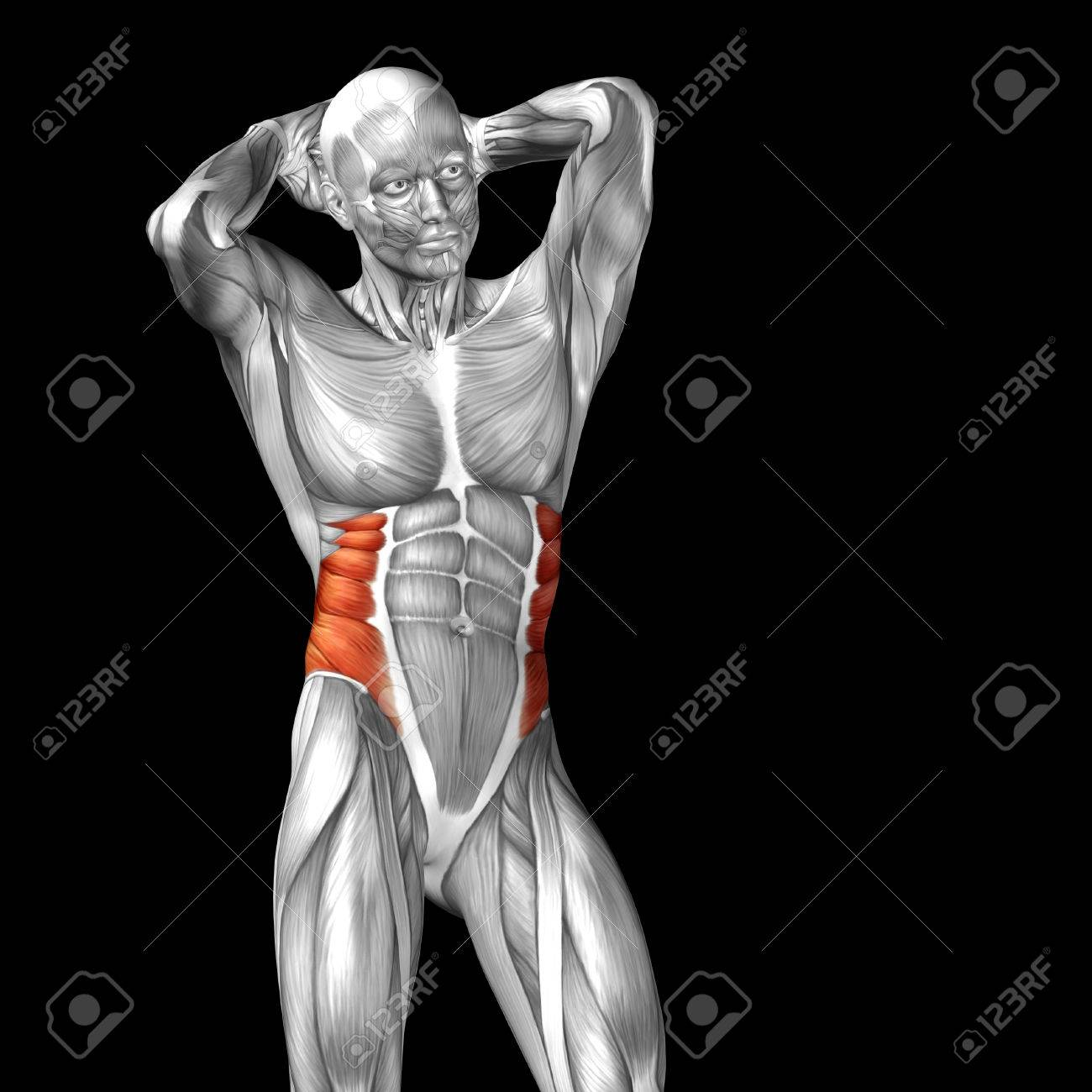 Conceptual 3D Chest Anatomy Muscle Isolated On Black Background ...