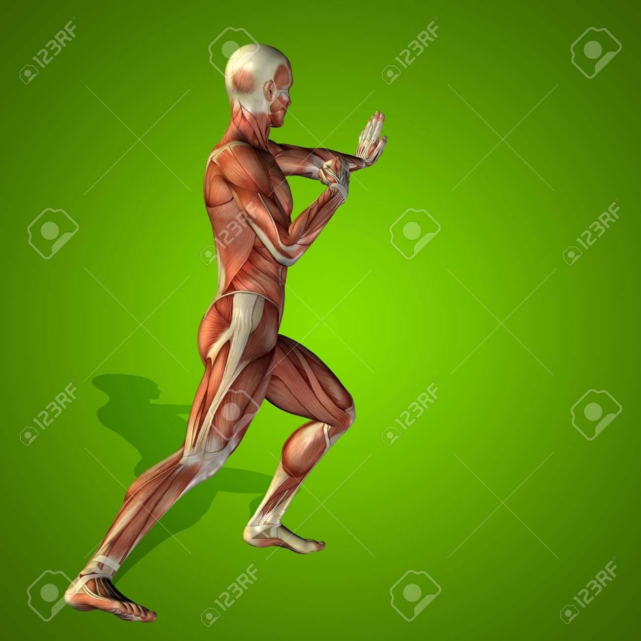 Conceptual 3D Anatomía De La Salud Humana En El Hombre Fondo Verde ...