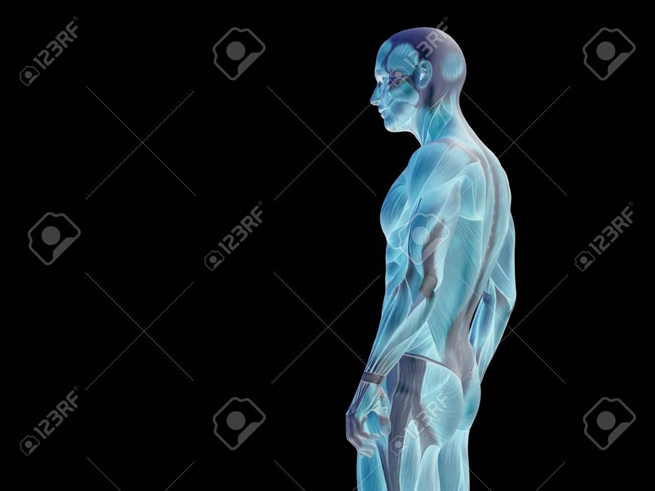 Konzeptionelle Menschliche Körper Anatomie Isoliert Auf Schwarzem ...