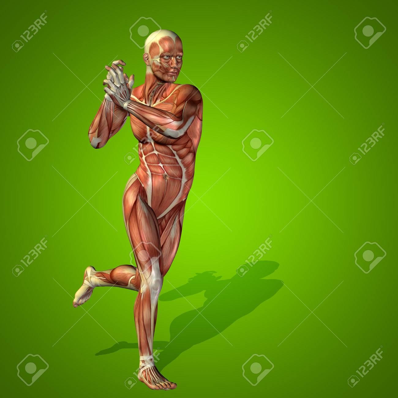 Anatomía Conceptual De La Salud Del Hombre Humano 3D En Fondo Verde ...