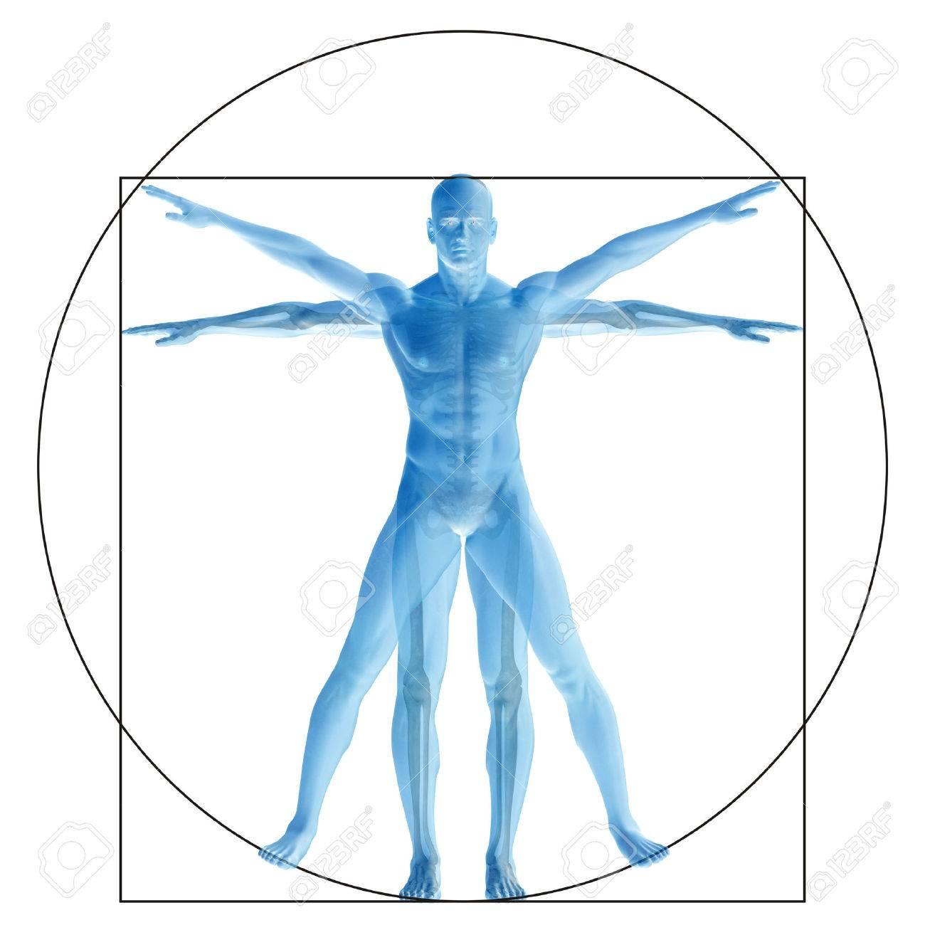 Humana O El Hombre De Vitruvio Como Un Concepto O Conceptual ...