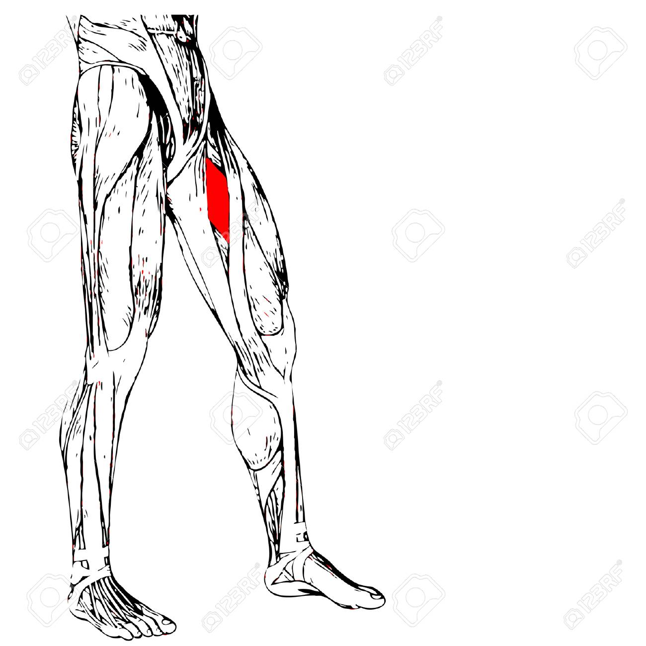 Ziemlich Herzkörperbild Fotos - Menschliche Anatomie Bilder ...