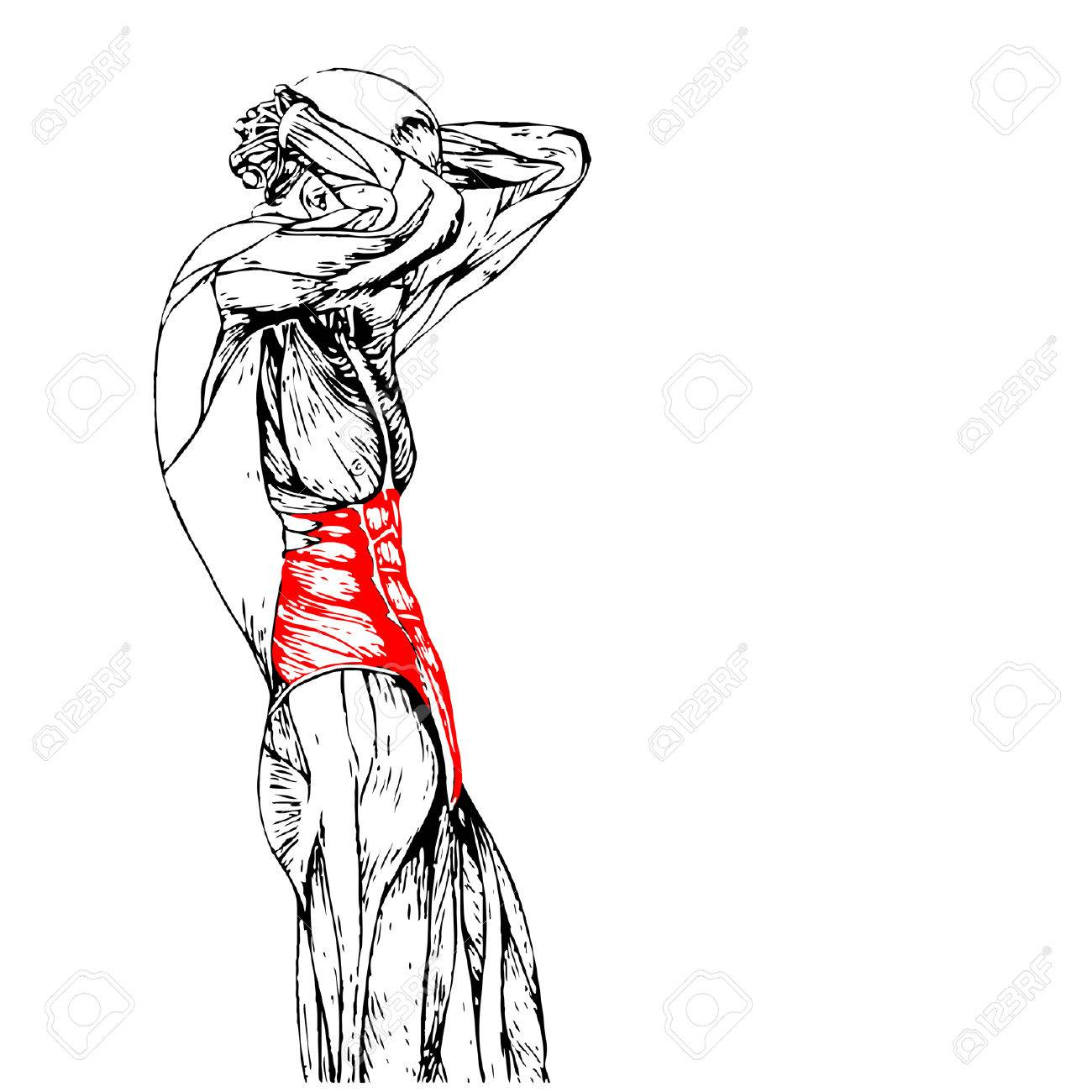 Concept Conceptual 3d Chest Human Anatomy Or Anatomical Muscle