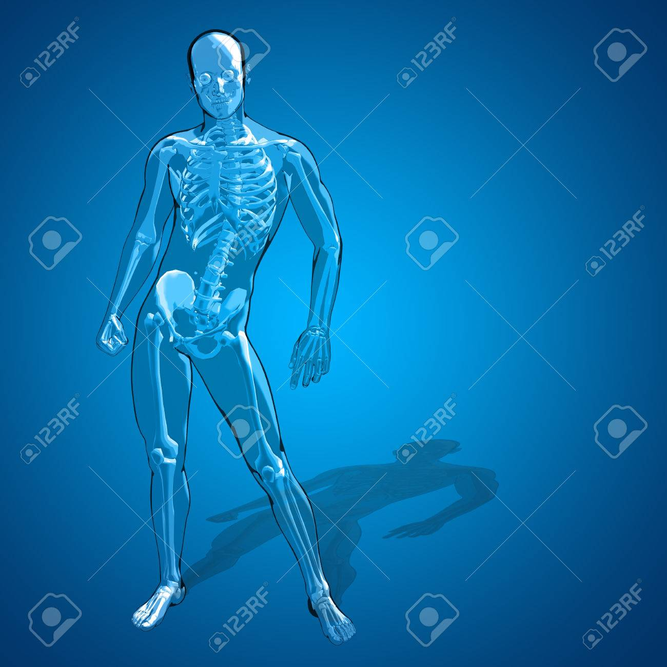 Conceptual 3D Human Man Or Male Skeleton Anatomy Transparent.. Stock ...